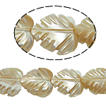 Seashell Beads, Natural Seashell, Leaf, original color, 12x13x5mm, Hole:Approx 1mm, Length:15.5 Inch, 35PCs/Strand, Sold By Strand