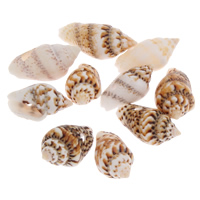 Trumpet Shell Beads